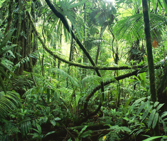 Innovation Is Like A Tropical Rainforest